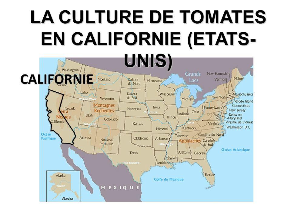 CALIFORNIE LA CULTURE DE TOMATES EN CALIFORNIE (ETATS- UNIS)
