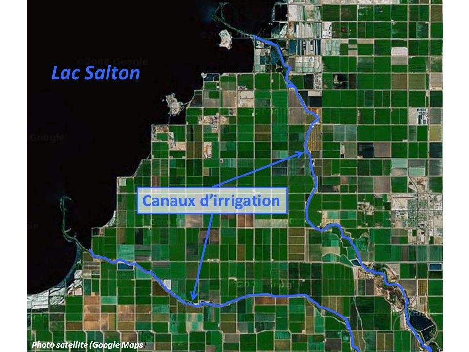 Lac Salton Canaux dirrigation Photo satellite (Google Maps)