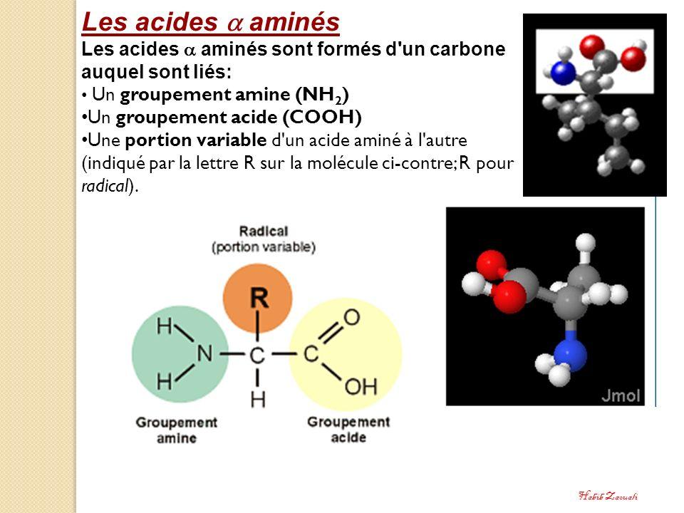 Les acides aminés Les acides aminés sont formés d'un carbone auquel sont liés: Un groupement amine (NH 2 ) Un groupement acide (COOH) Une portion vari