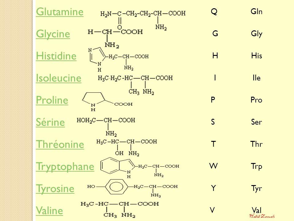 Glutamine QGln Glycine GGly Histidine HHis Isoleucine IIle Proline PPro Sérine SSer Thréonine TThr Tryptophane WTrp Tyrosine YTyr Valine VVal Habib Za