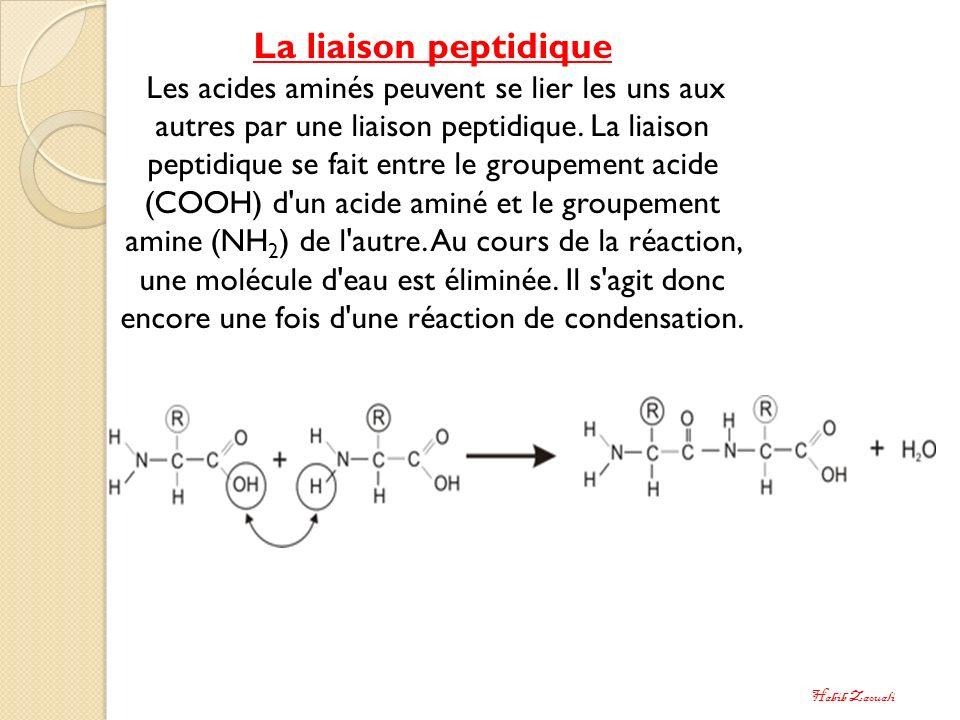 La liaison peptidique Les acides aminés peuvent se lier les uns aux autres par une liaison peptidique. La liaison peptidique se fait entre le groupeme