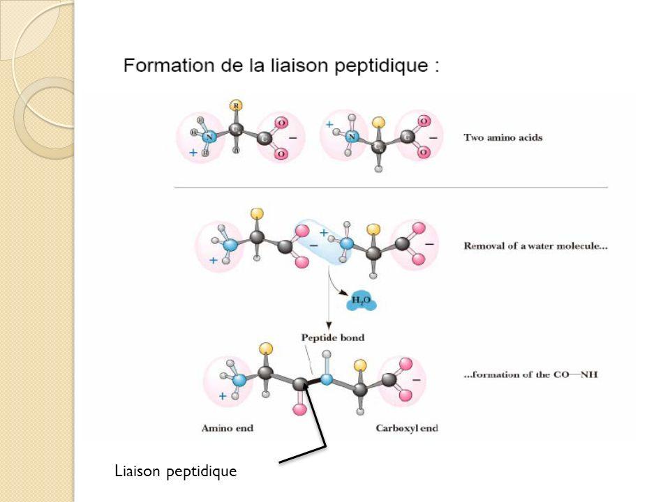 Glycine Valine Liaison peptidique