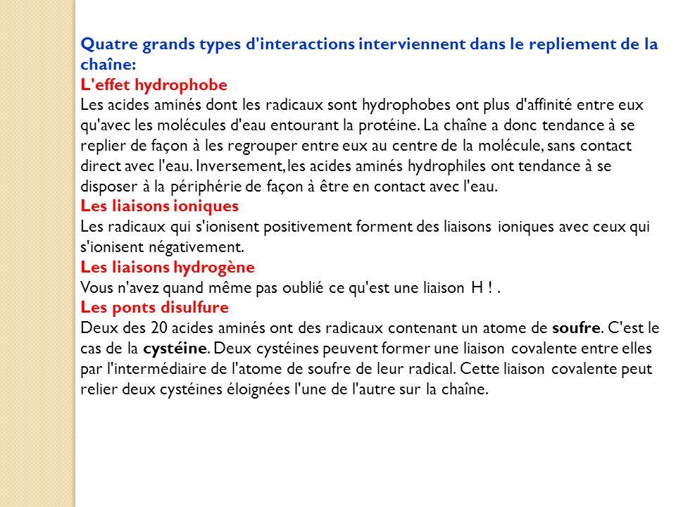 Quatre grands types d'interactions interviennent dans le repliement de la chaîne: L'effet hydrophobe Les acides aminés dont les radicaux sont hydropho