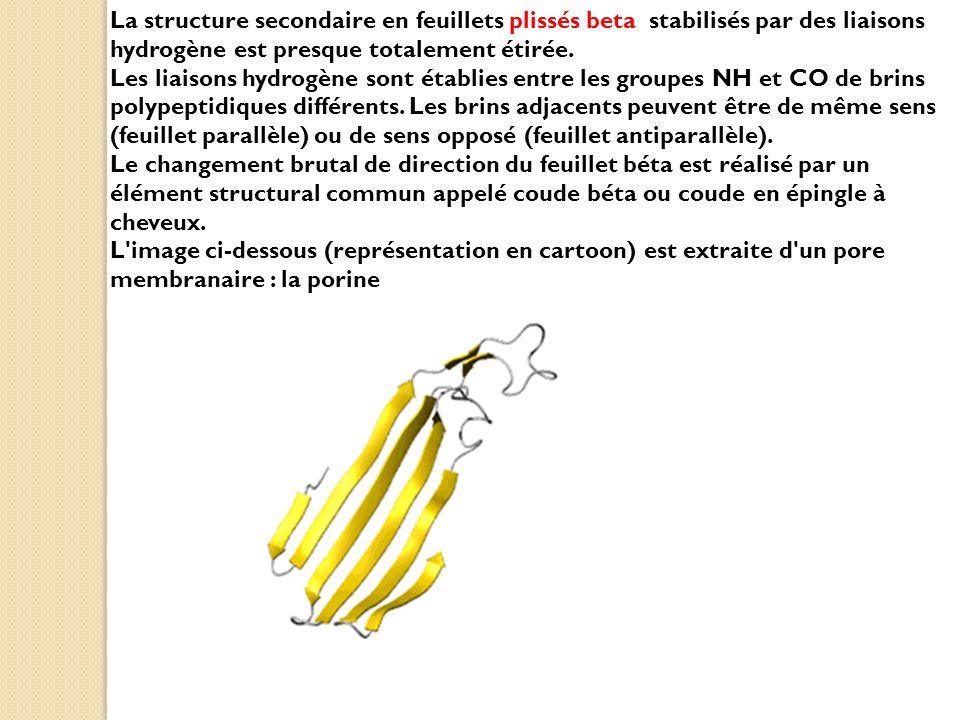 La structure secondaire en feuillets plissés beta stabilisés par des liaisons hydrogène est presque totalement étirée. Les liaisons hydrogène sont éta