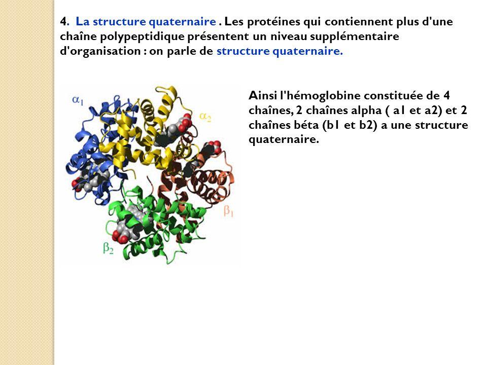 4. La structure quaternaire. Les protéines qui contiennent plus d'une chaîne polypeptidique présentent un niveau supplémentaire d'organisation : on pa