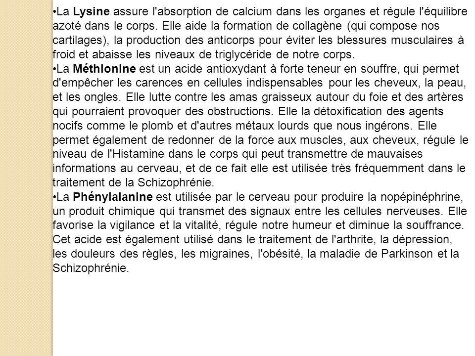 La Lysine assure l'absorption de calcium dans les organes et régule l'équilibre azoté dans le corps. Elle aide la formation de collagène (qui compose