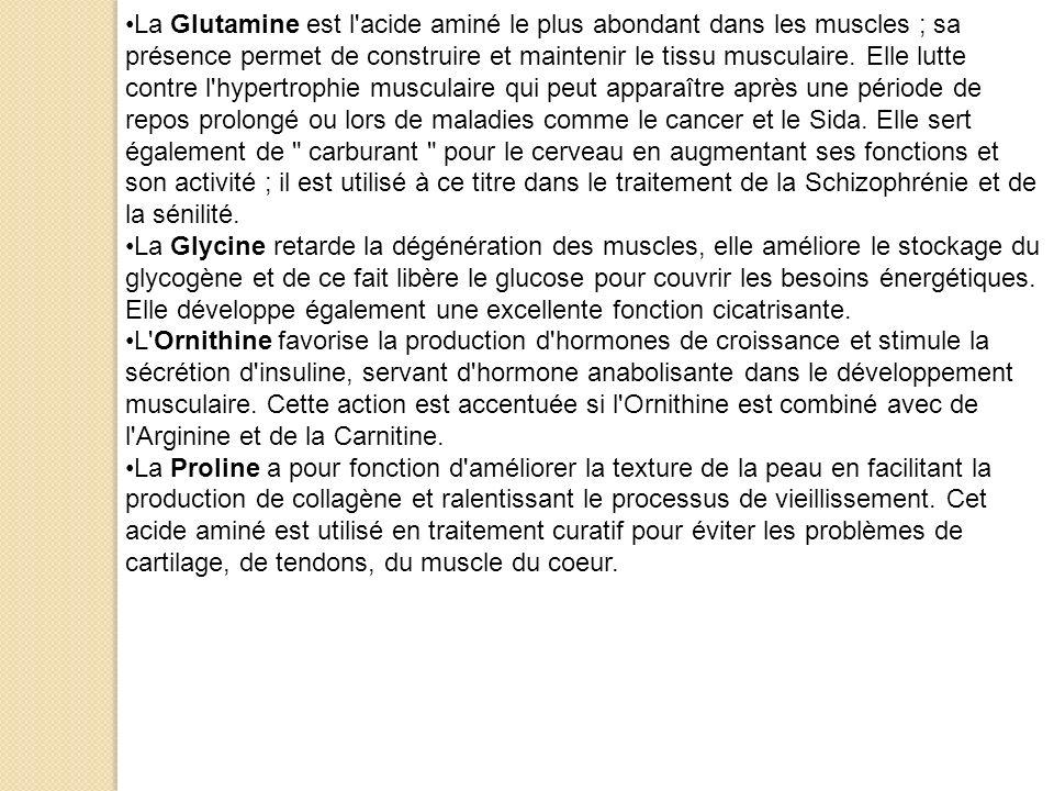 La Glutamine est l'acide aminé le plus abondant dans les muscles ; sa présence permet de construire et maintenir le tissu musculaire. Elle lutte contr