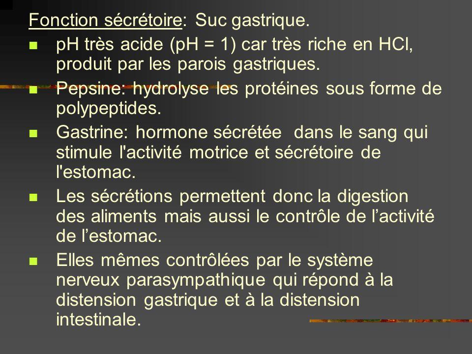 Fonction sécrétoire: Suc gastrique. pH très acide (pH = 1) car très riche en HCl, produit par les parois gastriques. Pepsine: hydrolyse les protéines