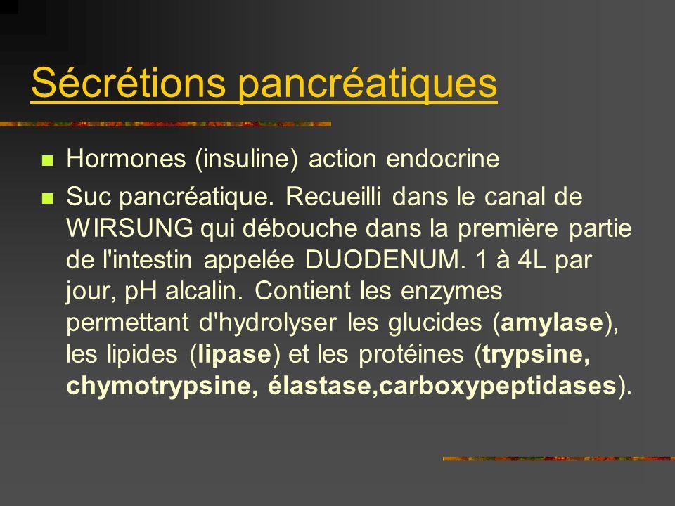 Sécrétions pancréatiques Hormones (insuline) action endocrine Suc pancréatique. Recueilli dans le canal de WIRSUNG qui débouche dans la première parti