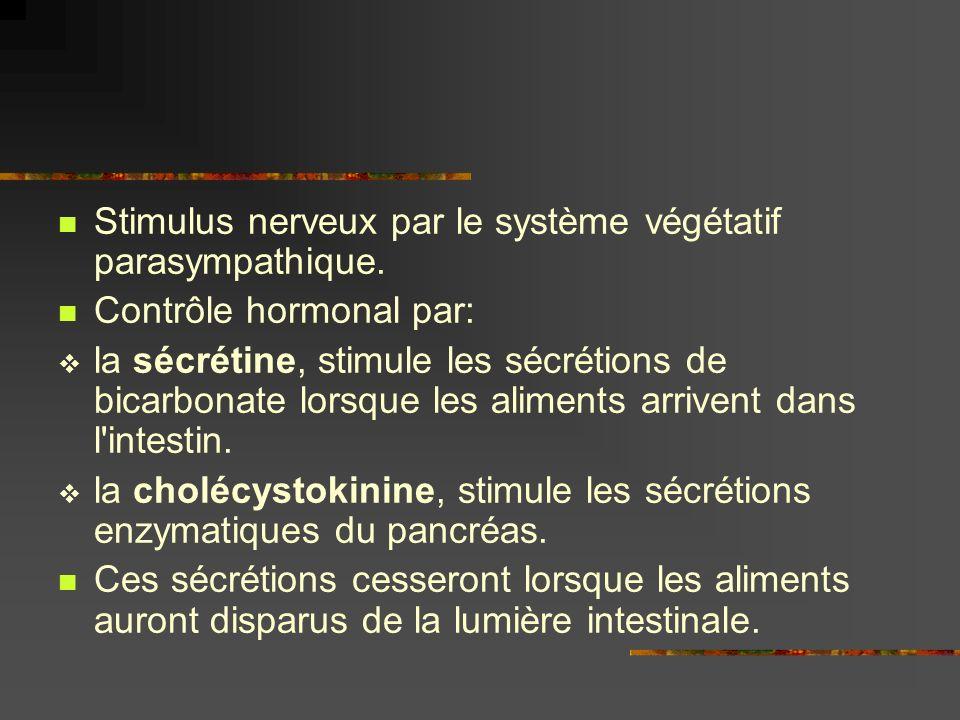 Stimulus nerveux par le système végétatif parasympathique. Contrôle hormonal par: la sécrétine, stimule les sécrétions de bicarbonate lorsque les alim