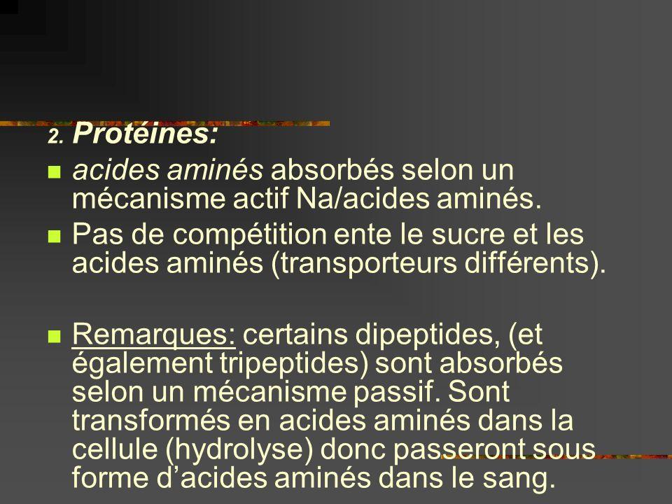 2. Protéines: acides aminés absorbés selon un mécanisme actif Na/acides aminés. Pas de compétition ente le sucre et les acides aminés (transporteurs d