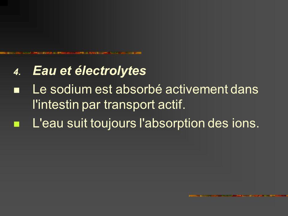 4. Eau et électrolytes Le sodium est absorbé activement dans l'intestin par transport actif. L'eau suit toujours l'absorption des ions.