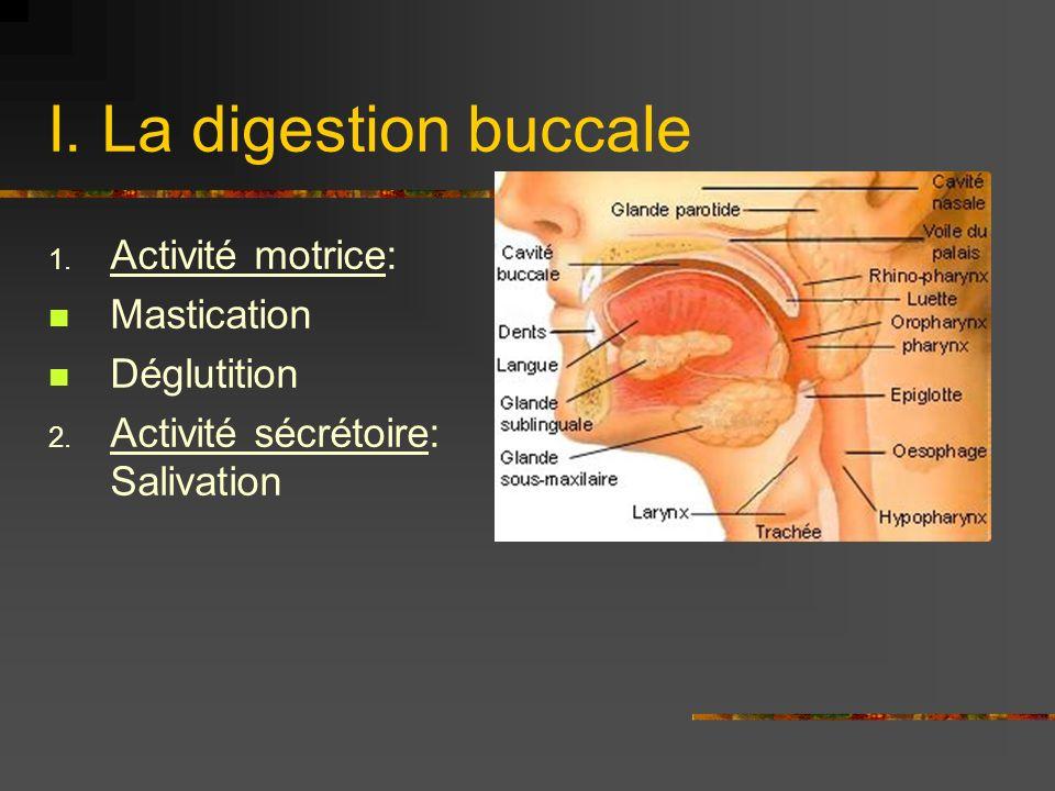 I. La digestion buccale 1. Activité motrice: Mastication Déglutition 2. Activité sécrétoire: Salivation