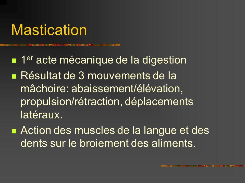 Mastication 1 er acte mécanique de la digestion Résultat de 3 mouvements de la mâchoire: abaissement/élévation, propulsion/rétraction, déplacements la