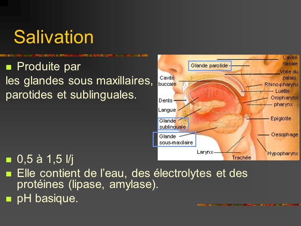 Salivation Produite par les glandes sous maxillaires, parotides et sublinguales. 0,5 à 1,5 l/j Elle contient de leau, des électrolytes et des protéine