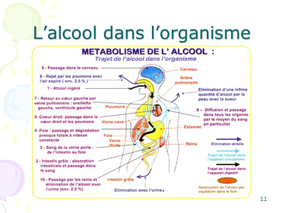 11 Lalcool dans lorganisme