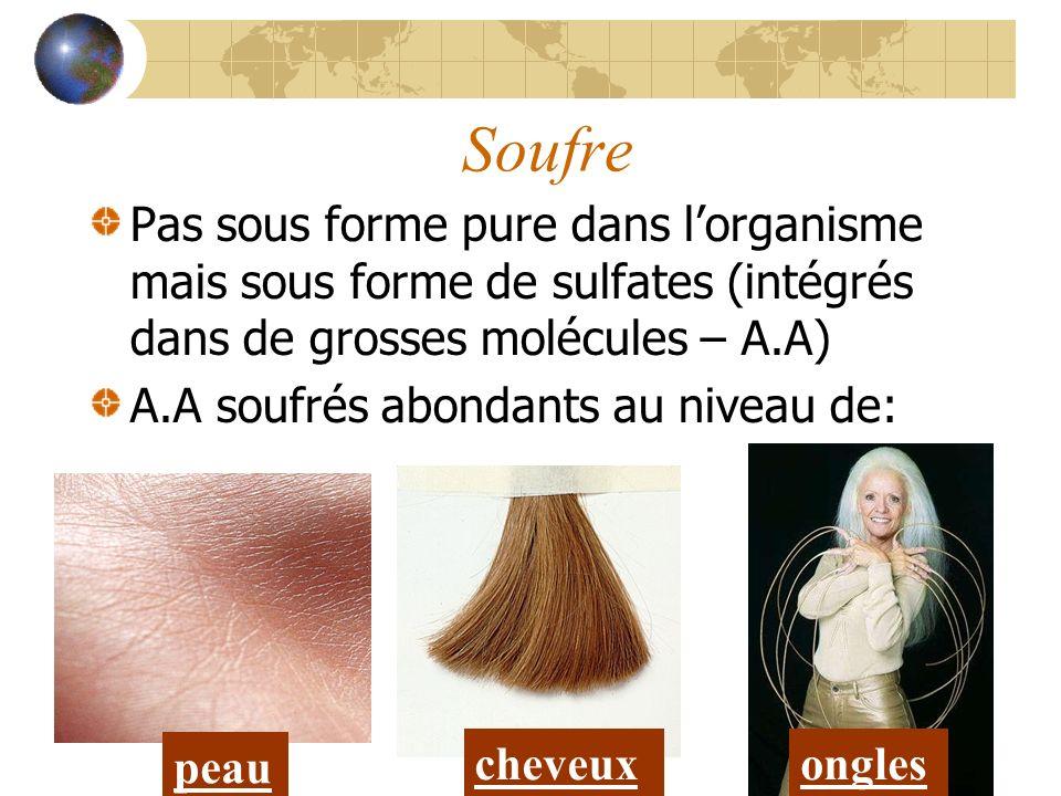 Soufre Pas sous forme pure dans lorganisme mais sous forme de sulfates (intégrés dans de grosses molécules – A.A) A.A soufrés abondants au niveau de: peau cheveuxongles