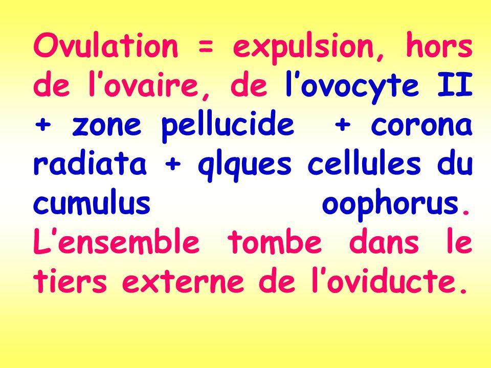 Ovulation = expulsion, hors de lovaire, de lovocyte II + zone pellucide + corona radiata + qlques cellules du cumulus oophorus. Lensemble tombe dans l