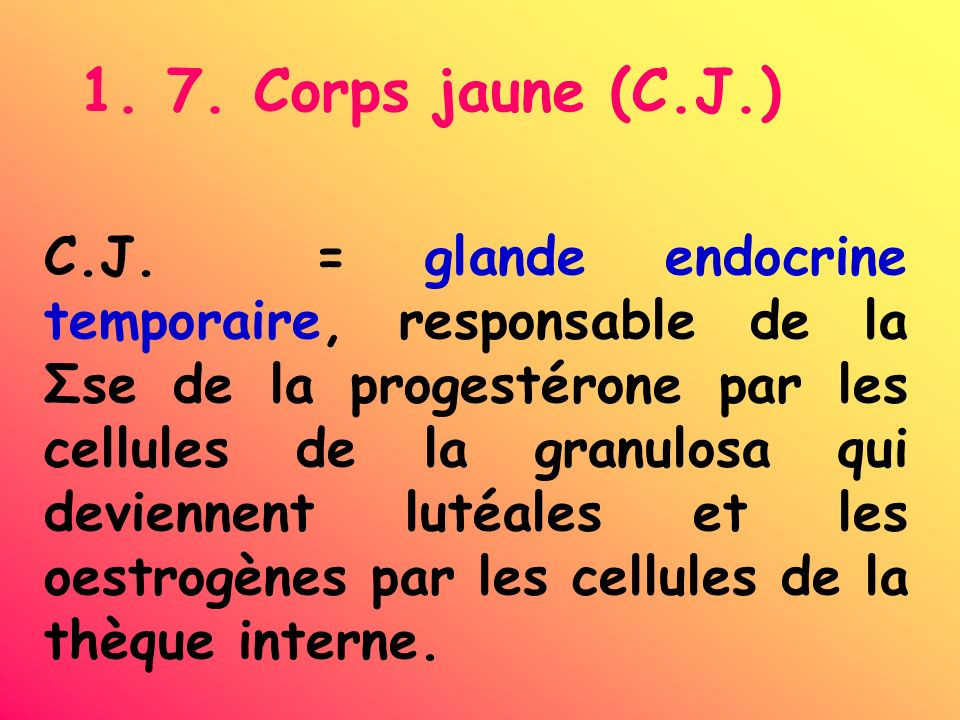 1. 7. Corps jaune (C.J.) C.J. = glande endocrine temporaire, responsable de la Σse de la progestérone par les cellules de la granulosa qui deviennent