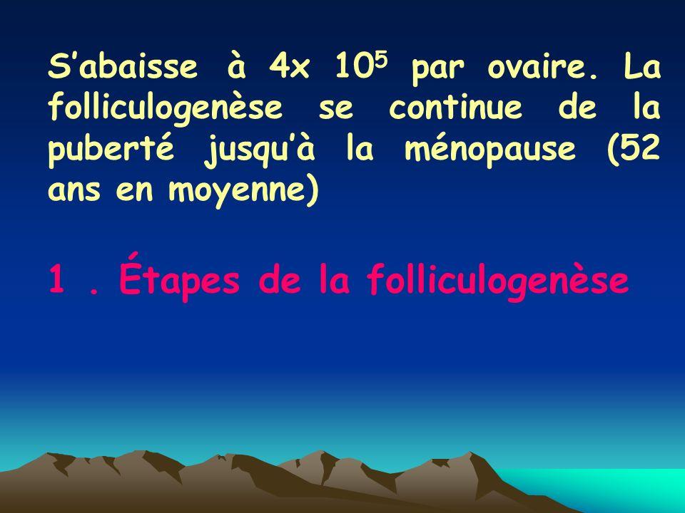 Sabaisse à 4x 10 5 par ovaire. La folliculogenèse se continue de la puberté jusquà la ménopause (52 ans en moyenne) 1. Étapes de la folliculogenèse