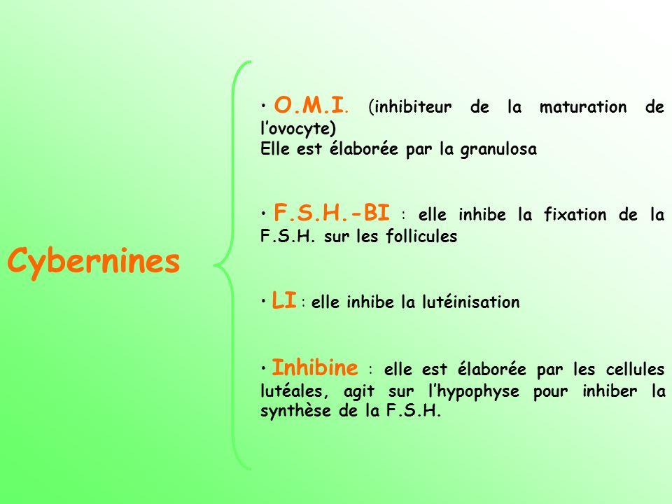 Cybernines O.M.I. (inhibiteur de la maturation de lovocyte) Elle est élaborée par la granulosa F.S.H.-BI : elle inhibe la fixation de la F.S.H. sur le
