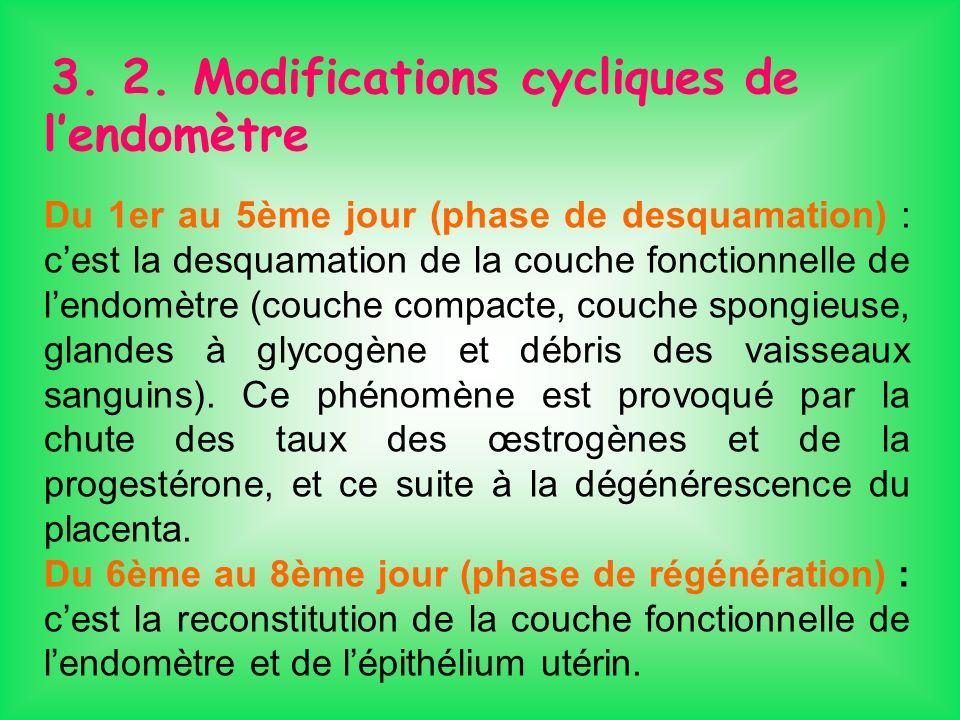 3. 2. Modifications cycliques de lendomètre Du 1er au 5ème jour (phase de desquamation) : cest la desquamation de la couche fonctionnelle de lendomètr