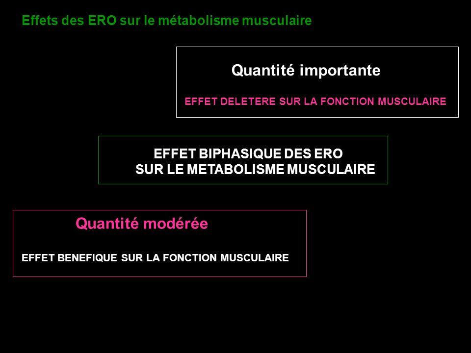 EFFET BIPHASIQUE DES ERO SUR LE METABOLISME MUSCULAIRE Quantité modérée EFFET BENEFIQUE SUR LA FONCTION MUSCULAIRE Quantité importante EFFET DELETERE