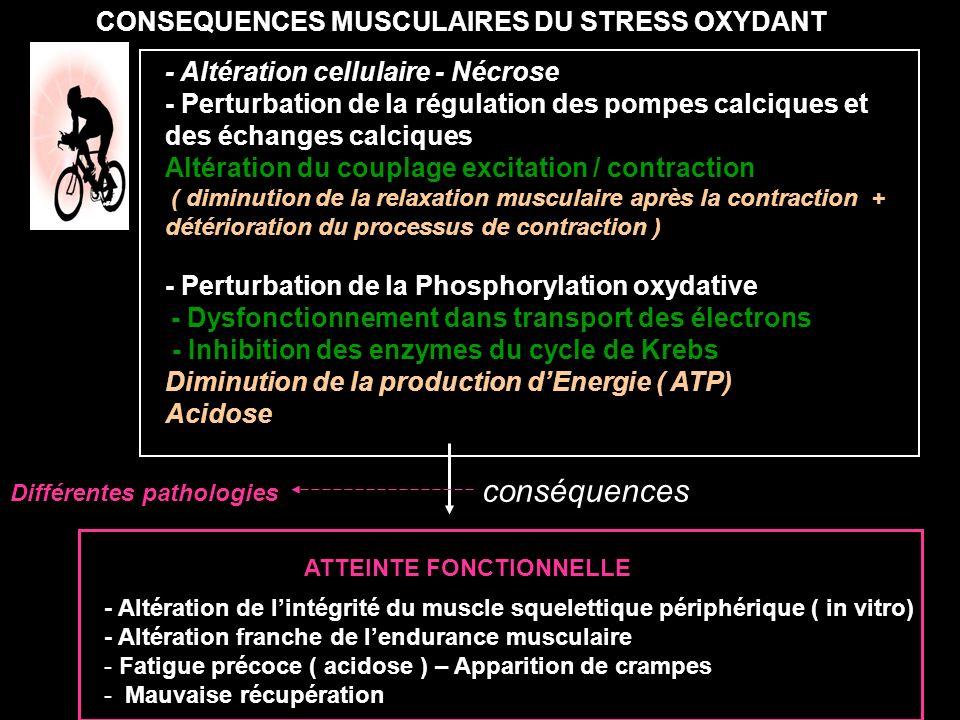 CONSEQUENCES MUSCULAIRES DU STRESS OXYDANT - Altération cellulaire - Nécrose - Perturbation de la régulation des pompes calciques et des échanges calc