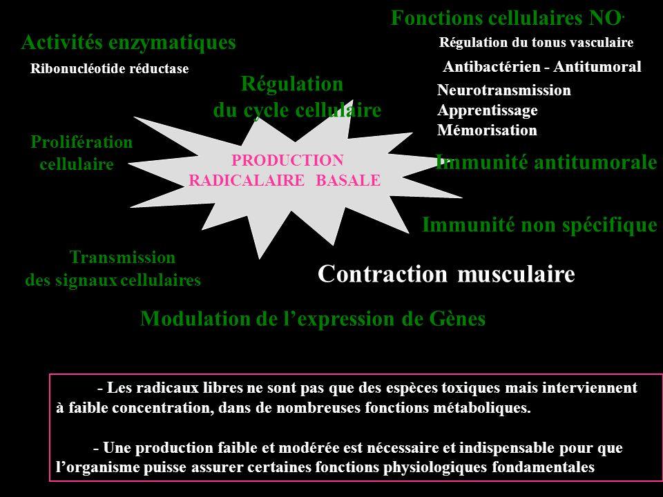 Conséquences de lexercice physique intensif chez les sujets non entraînés et entraînés ANTIOXYDANTS - Modification de lactivité de la SOD et de la GPX dans le muscle et le sang - Augmentation du Glutathion oxydé (GSSG) dans le muscle et le sang - Augmentation de [ Vit C ] plasmatique ( conséquence de son relargage à partir des surrénales ) - Modification [ Vit E ] plasmatique ( conséquence de son utilisation périphérique ) MESURE DES ERO Augmentation importante de la production dERO dans le muscle et le sang Augmentation des MDA et des carbonyles dans le sang et le muscle