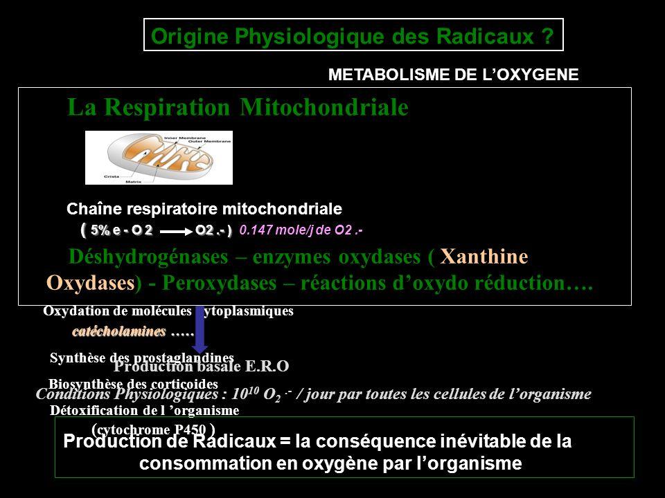 Origine Physiologique des Radicaux ? La Respiration Mitochondriale Chaîne respiratoire mitochondriale ( 5% e - O 2 O2.- ) ( 5% e - O 2 O2.- ) 0.147 mo