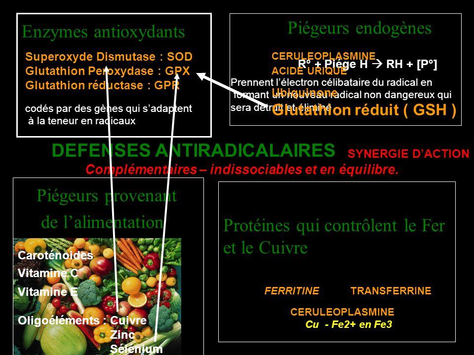 Supplémentation antioxydante du sportif Vitamine C Vitamine E Zinc Sélénium Vitamine B2 Glutathion Coenzyme Q10 Caroténoides Vitamine A Sélénium Indispensable à la synthèse et à lactivité de la Glutathion peroxydase ( GPx ) Eviter le surdosage : dosage plasmatique de la GPX indispensable avant et après une supplémentation ) Apports quotidiens conseillés : 45 – 90 µg / j ( étude épreuve de biathlon : 150 mg - 75µg / augmentation GPX ) Zinc Permet de stabiliser la Superoxyde dismutase ( SOD) sous une forme active Protègerait les protéines de loxydation AQC : 12 – 19 mg Vitamine B2 Pas antioxydante Mais elle est le cofacteur de la glutathion réductase qui régénère le glutathion oxydé ( GSSG) en glutathion réduit (GSH ) GSSG GSH GPXROOH H2O GSSG Réductase ( B2 )