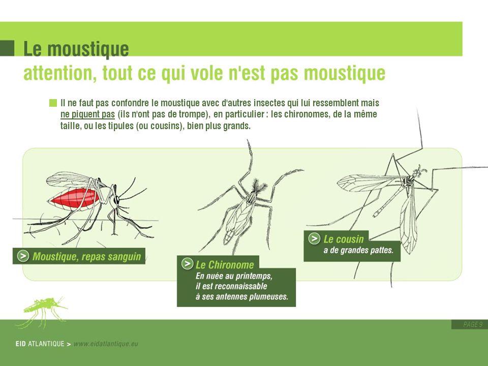 PAGE 9 Il ne faut pas confondre le moustique avec d'autres insectes qui lui ressemblent mais ne piquent pas (ils n'ont pas de trompe), en particulier
