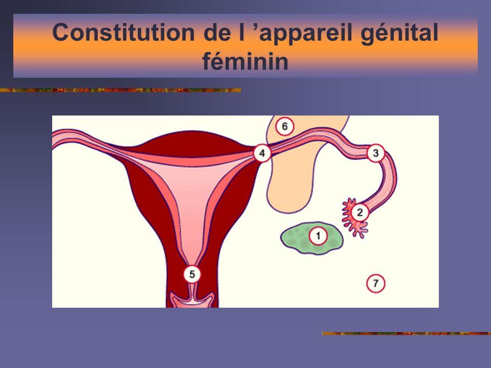 Constitution de l appareil génital féminin