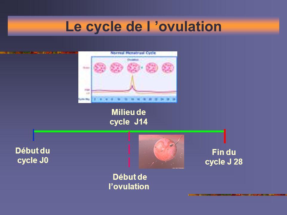 Le cycle de l ovulation Début du cycle J0 Début de lovulation Milieu de cycle J14 Fin du cycle J 28