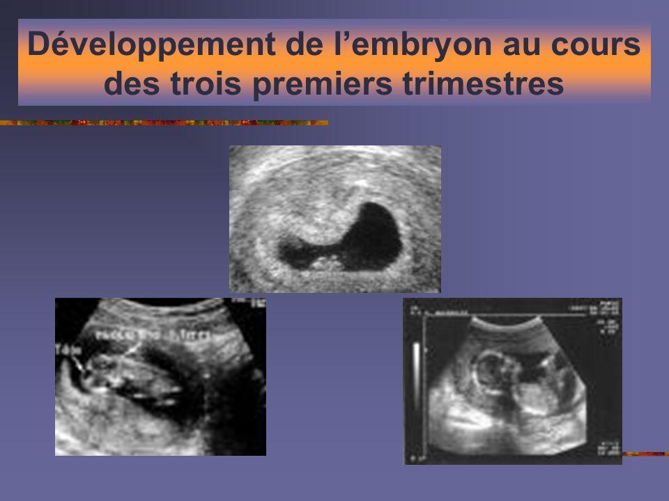 Développement de lembryon au cours des trois premiers trimestres