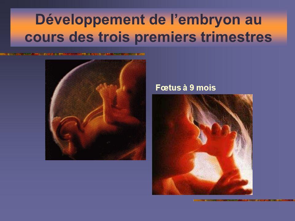 Développement de lembryon au cours des trois premiers trimestres Fœtus à 9 mois