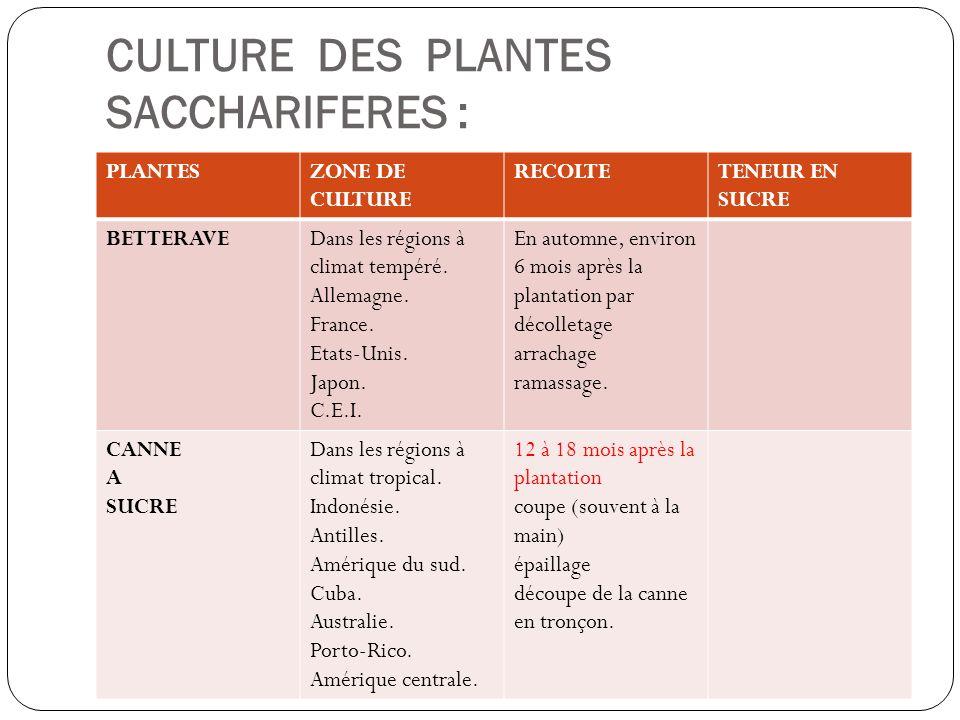 CULTURE DES PLANTES SACCHARIFERES : PLANTESZONE DE CULTURE RECOLTETENEUR EN SUCRE BETTERAVEDans les régions à climat tempéré. Allemagne. France. Etats