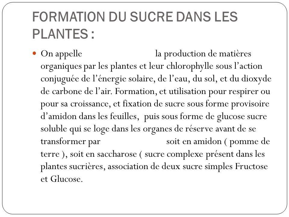 FORMATION DU SUCRE DANS LES PLANTES : On appelle la production de matières organiques par les plantes et leur chlorophylle sous laction conjuguée de l