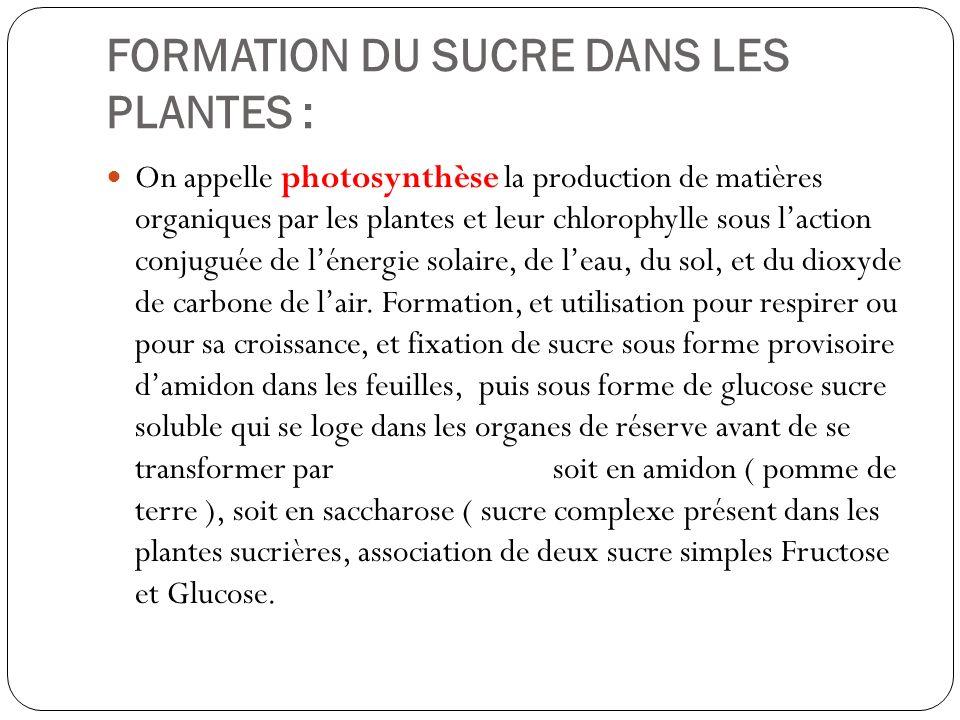 FORMATION DU SUCRE DANS LES PLANTES : On appelle photosynthèse la production de matières organiques par les plantes et leur chlorophylle sous laction