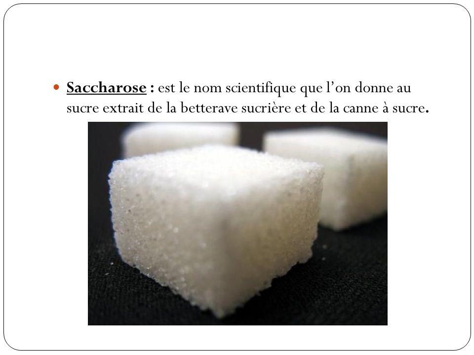 Saccharose : est le nom scientifique que lon donne au sucre extrait de la betterave sucrière et de la canne à sucre.