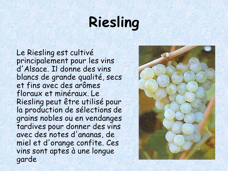 Muscat blanc à petits grains Ce cépage est cultivé principalement en Alsace pour la fabrication des Muscat d Alsace Ce cépage remonte à la plus haute antiquité.