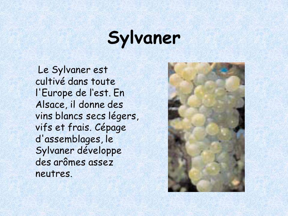 Sylvaner Le Sylvaner est cultivé dans toute l Europe de lest.
