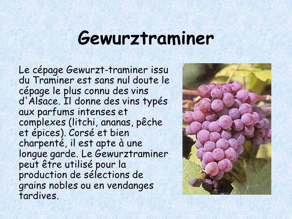 Gewurztraminer Le cépage Gewurzt-traminer issu du Traminer est sans nul doute le cépage le plus connu des vins d Alsace.