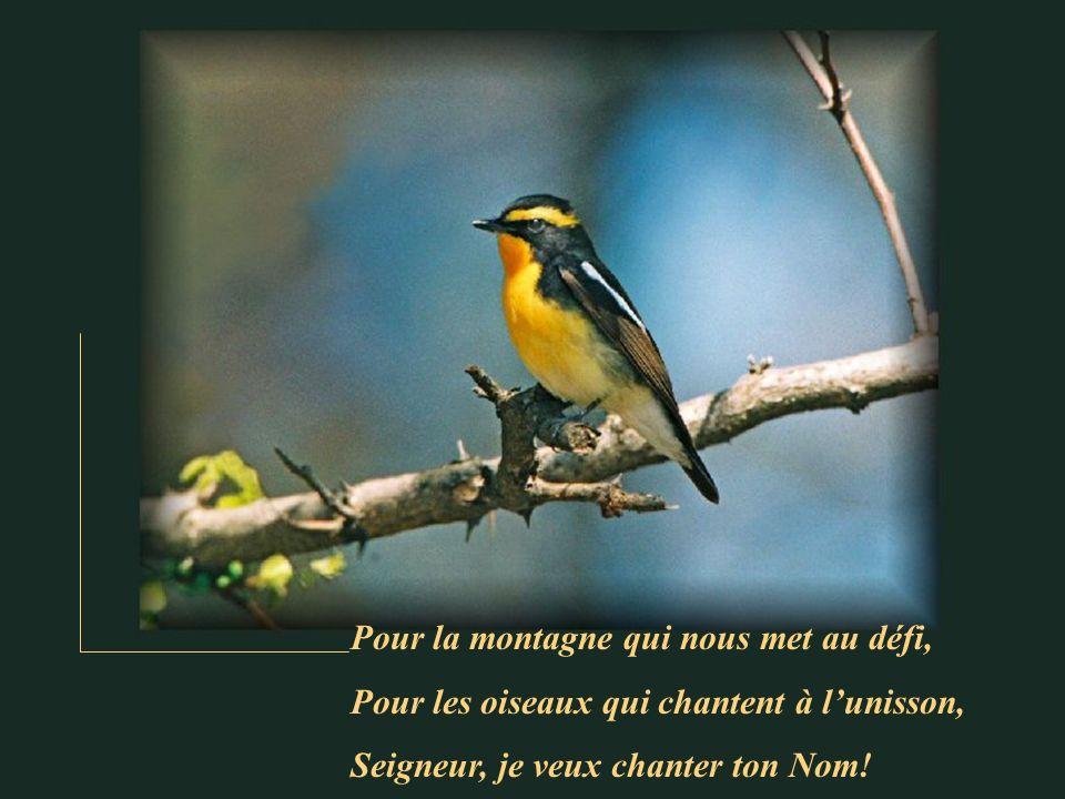 Pour la montagne qui nous met au défi, Pour les oiseaux qui chantent à lunisson, Seigneur, je veux chanter ton Nom!