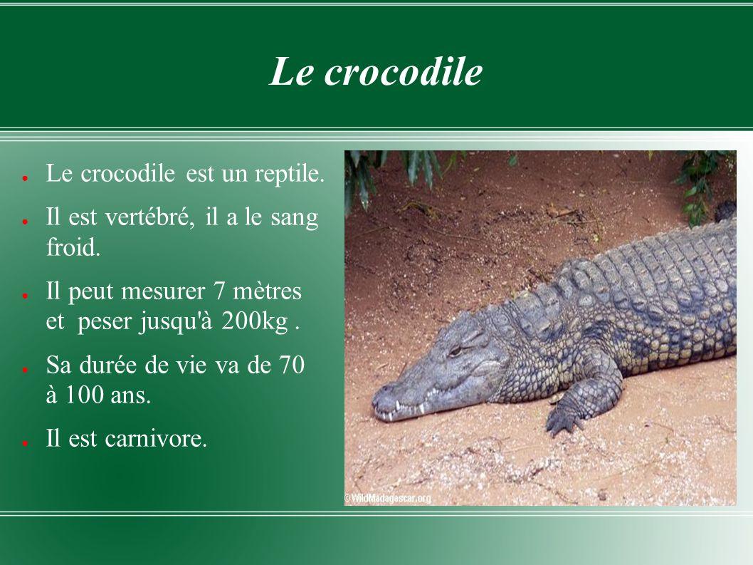 Le crocodile Le crocodile est un reptile. Il est vertébré, il a le sang froid. Il peut mesurer 7 mètres et peser jusqu'à 200kg. Sa durée de vie va de
