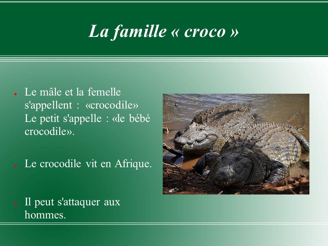 La famille « croco » Le mâle et la femelle s'appellent : «crocodile» Le petit s'appelle : «le bébé crocodile». Le crocodile vit en Afrique. Il peut s'