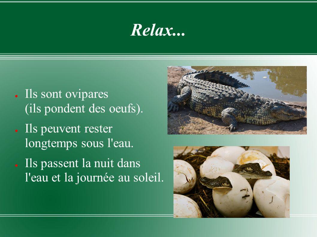 Beaucoup de dents .Le crocodile est le plus grand reptile.