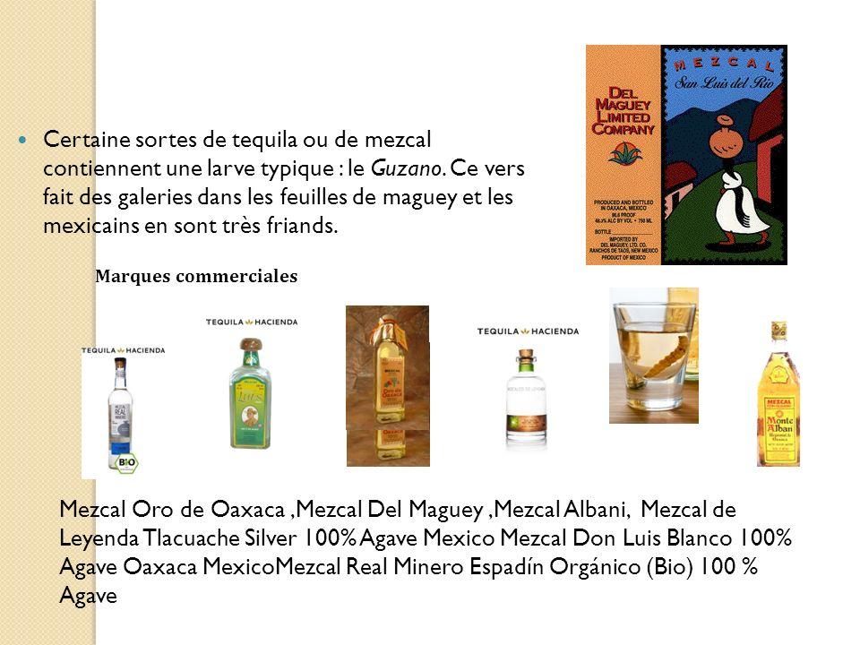Certaine sortes de tequila ou de mezcal contiennent une larve typique : le Guzano. Ce vers fait des galeries dans les feuilles de maguey et les mexica