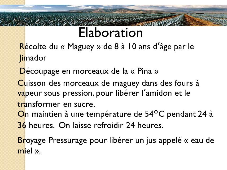 Elaboration Découpage en morceaux de la « Pina » Récolte du « Maguey » de 8 à 10 ans dâge par le Jimador Cuisson des morceaux de maguey dans des fours