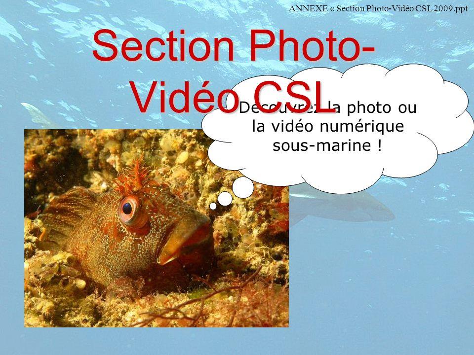Découvrez la photo ou la vidéo numérique sous-marine ! Section Photo- Vidéo CSL ANNEXE « Section Photo-Vidéo CSL 2009.ppt